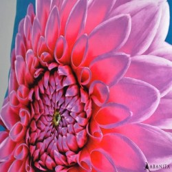 coussin avec imprimé fleurs dahlia haute qualité d'impression